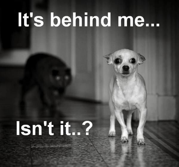 its-behind-me-black-cat-white-dog.jpg